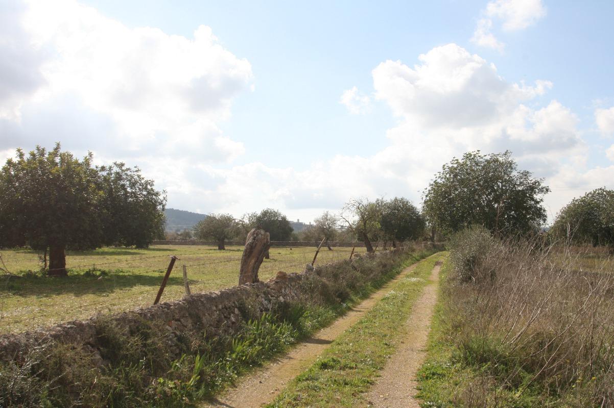 Grundstück, Felanitx