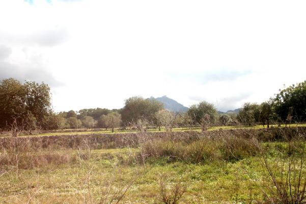 Baugrund nahe Felanitx mit Finca-Bauprojekt in ruhiger Lage